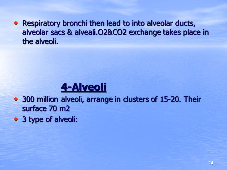 14 Respiratory bronchi then lead to into alveolar ducts, alveolar sacs & alveali.O2&CO2 exchange takes place in the alveoli.