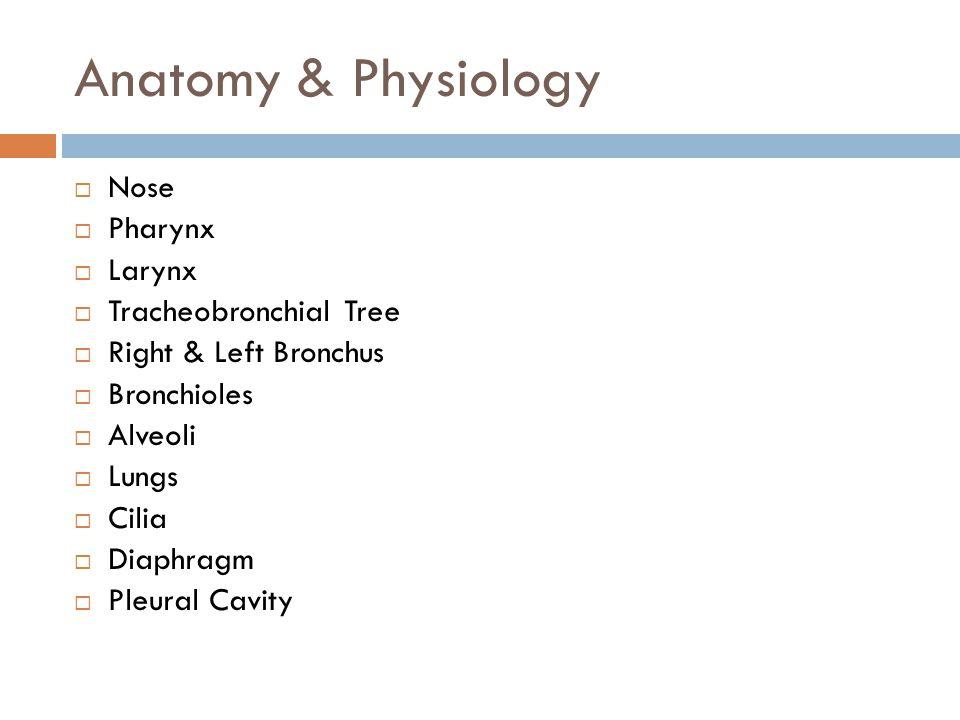 Anatomy & Physiology  Nose  Pharynx  Larynx  Tracheobronchial Tree  Right & Left Bronchus  Bronchioles  Alveoli  Lungs  Cilia  Diaphragm  Pleural Cavity
