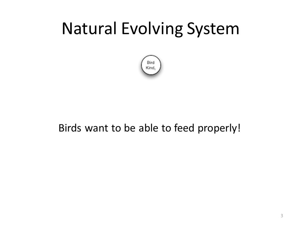 Natural Evolving System 3 Birds want to be able to feed properly!