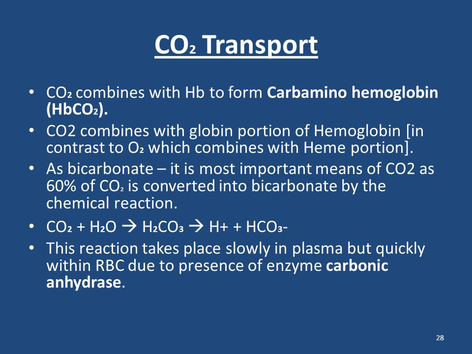 CO 2 Transport CO 2 combines with Hb to form Carbamino hemoglobin (HbCO 2 ). CO2 combines with globin portion of Hemoglobin [in contrast to O 2 which