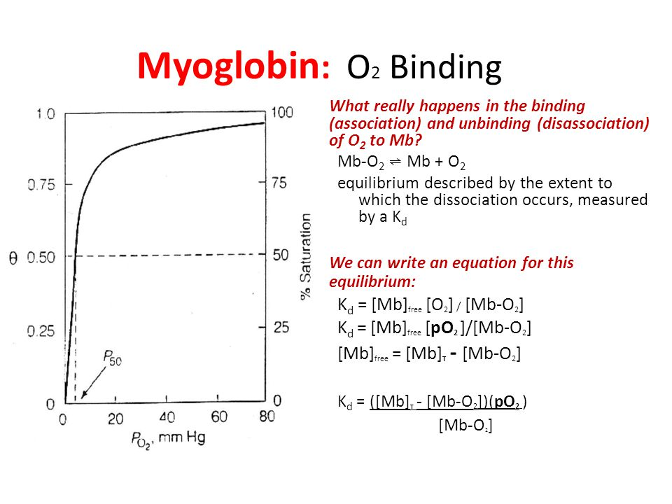 Myoglobin : O 2 Binding What really happens in the binding (association) and unbinding (disassociation) of O 2 to Mb.