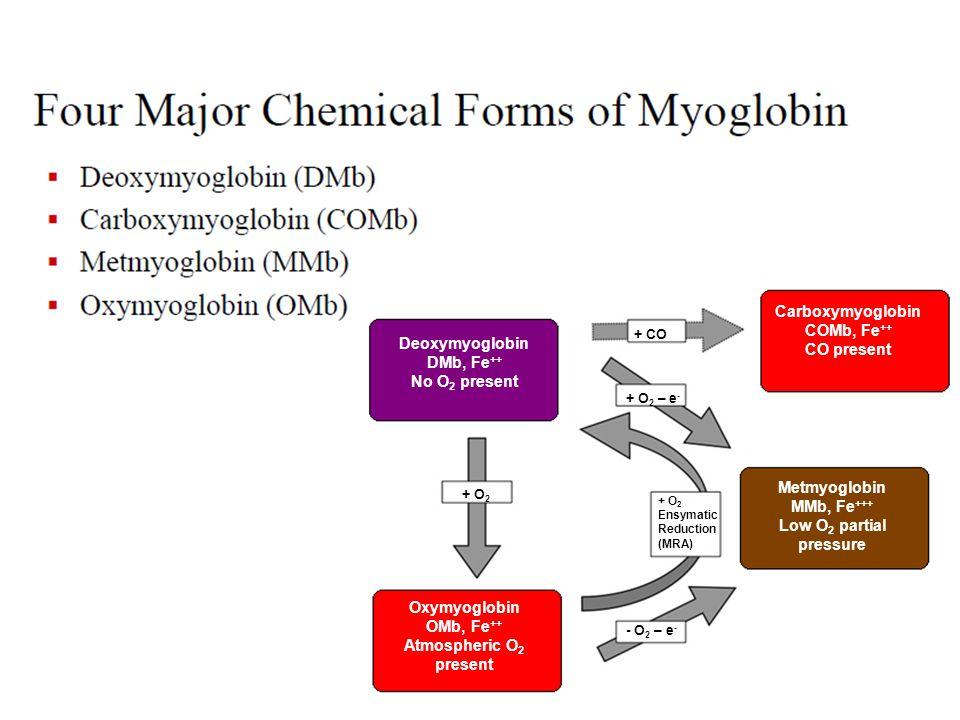 Deoxymyoglobin DMb, Fe ++ No O 2 present Oxymyoglobin OMb, Fe ++ Atmospheric O 2 present + O 2 Metmyoglobin MMb, Fe +++ Low O 2 partial pressure Carboxymyoglobin COMb, Fe ++ CO present - O 2 – e - + O 2 Ensymatic Reduction (MRA) + O 2 – e - + CO
