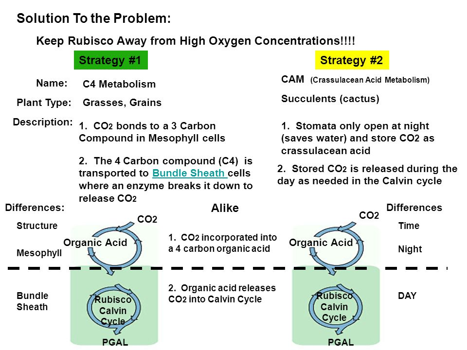 Solution To the Problem: Keep Rubisco Away from High Oxygen Concentrations!!!.