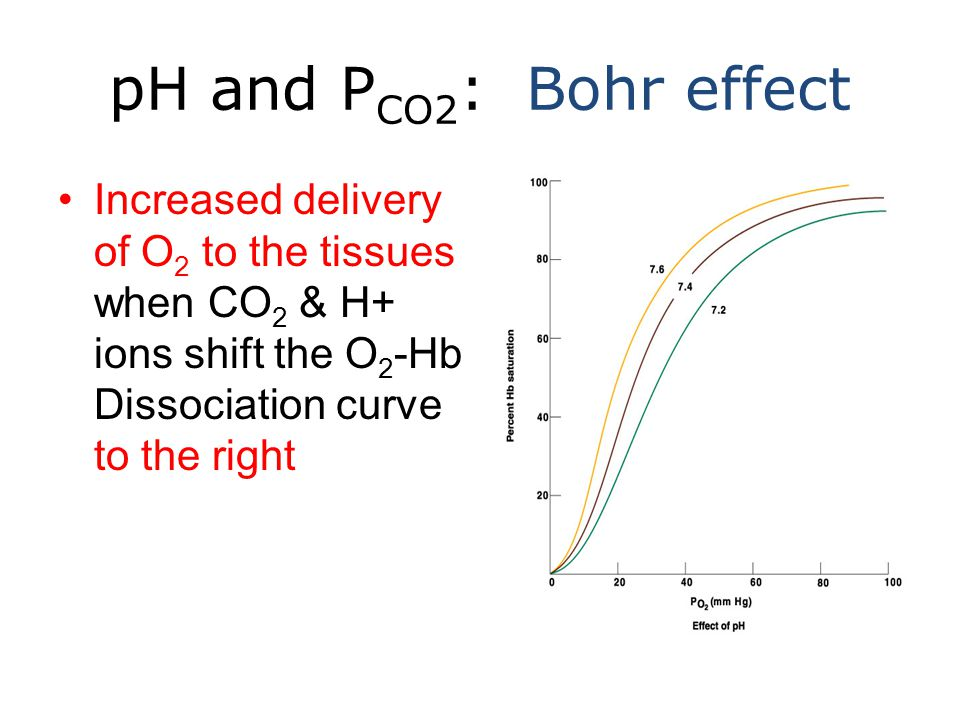 pH and P CO2 : Bohr effect Increased delivery of O 2 to the tissues when CO 2 & H+ ions shift the O 2 -Hb Dissociation curve to the right