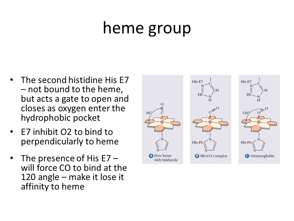 heme group The second histidine His E7 – not bound to the heme, but acts a gate to open and closes as oxygen enter the hydrophobic pocket E7 inhibit O