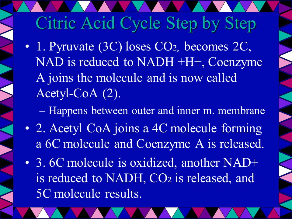 Citric Acid Cycle Step by Step 1.