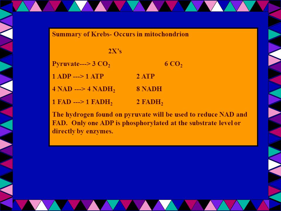 Summary of Krebs- Occurs in mitochondrion 2X's Pyruvate---> 3 CO 2 6 CO 2 1 ADP ---> 1 ATP 2 ATP 4 NAD ---> 4 NADH 2 8 NADH 1 FAD ---> 1 FADH 2 2 FADH 2 The hydrogen found on pyruvate will be used to reduce NAD and FAD.
