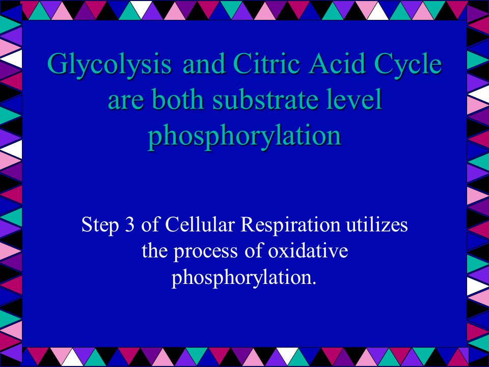 Glycolysis and Citric Acid Cycle are both substrate level phosphorylation Step 3 of Cellular Respiration utilizes the process of oxidative phosphorylation.