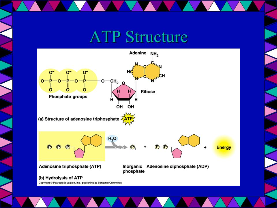 ATP Synthetase Complex using kinetic movement of H+ (protons)