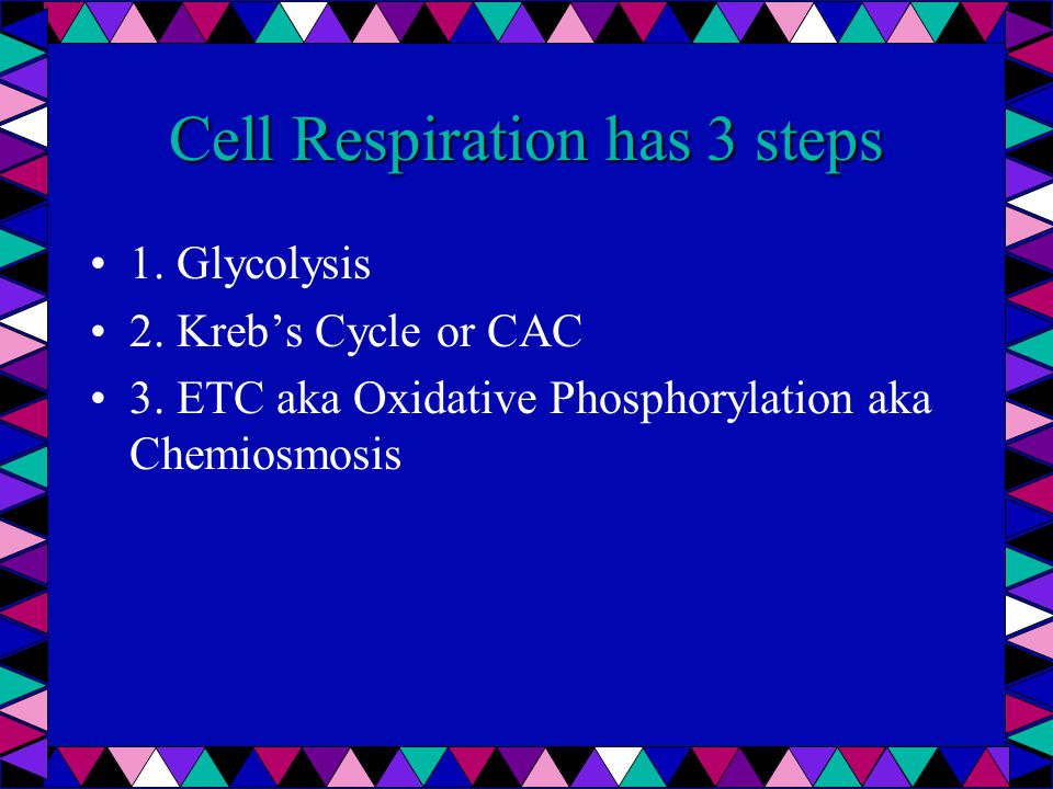 Glycolysis Occurs in cytosol This process occurs with/ without O 2 in the cytolasm.