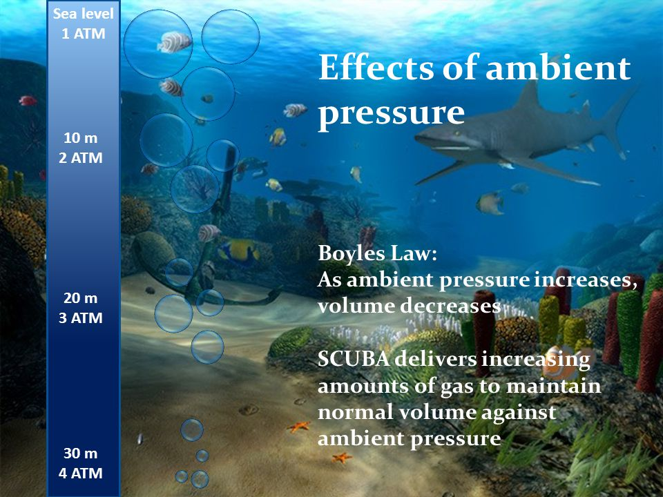 Sea level 1 ATM 10 m 2 ATM 20 m 3 ATM 30 m 4 ATM Effects of ambient pressure Boyles Law: As ambient pressure increases, volume decreases SCUBA deliver