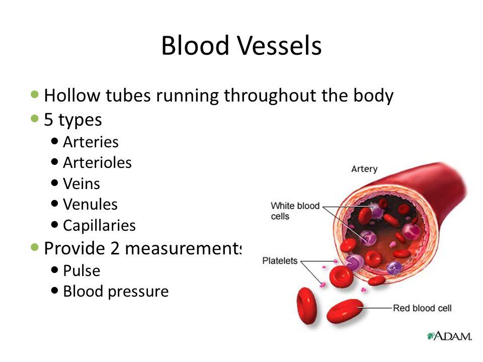 Blood Vessels Hollow tubes running throughout the body 5 types Arteries Arterioles Veins Venules Capillaries Provide 2 measurements: Pulse Blood pressure