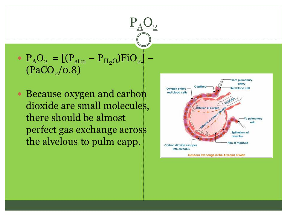 PAO2PAO2 P A O 2 = [(P atm – P H 2 O )FiO 2 ] – (PaCO 2 /0.8) Because oxygen and carbon dioxide are small molecules, there should be almost perfect gas exchange across the alvelous to pulm capp.