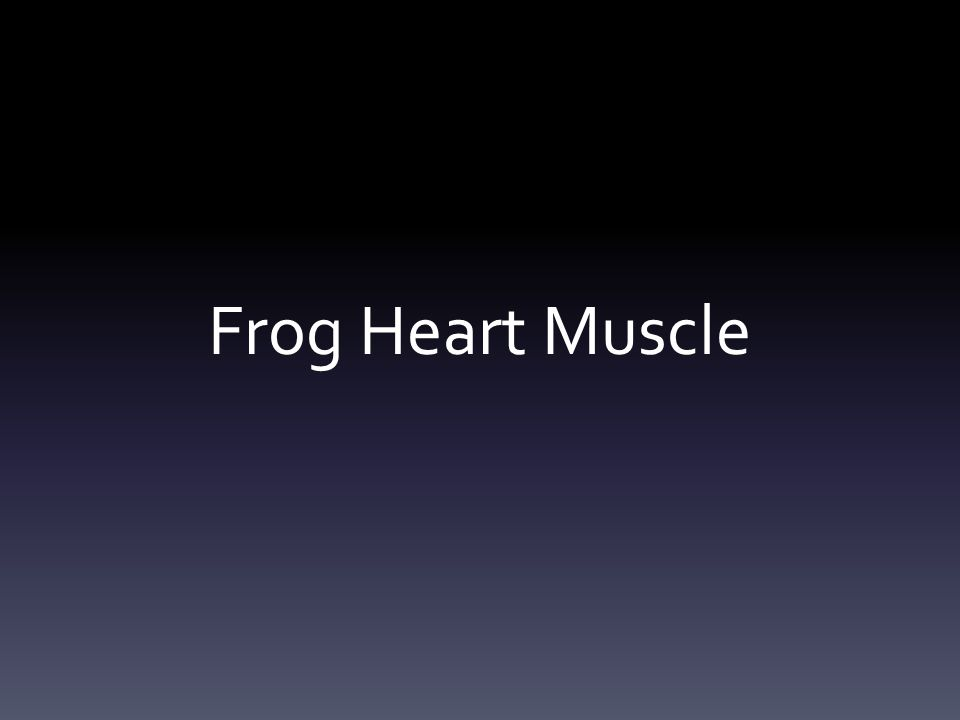 Frog Heart Muscle