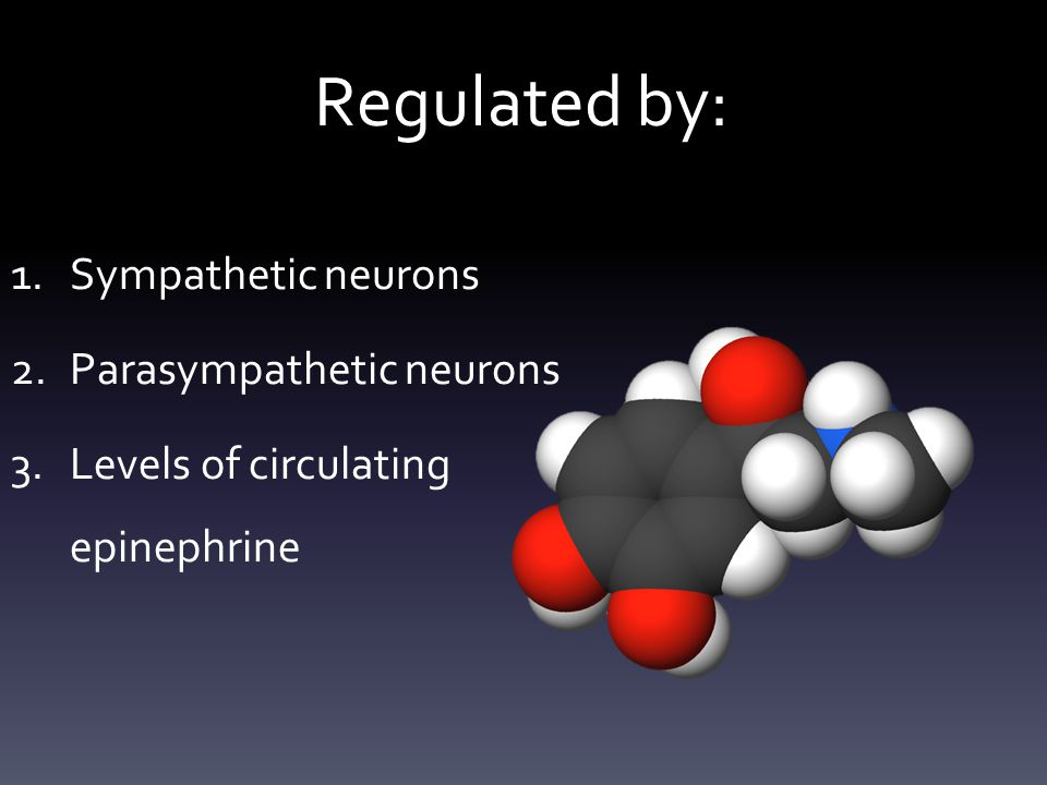 Regulated by: 1.Sympathetic neurons 2.Parasympathetic neurons 3.Levels of circulating epinephrine