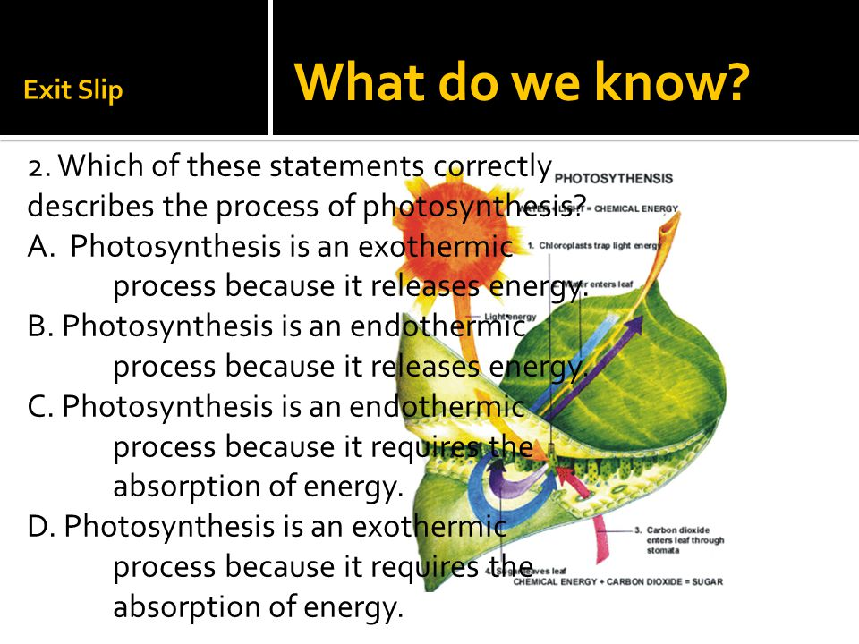 Exit Slip 2. Which of these statements correctly describes the process of photosynthesis? A. Photosynthesis is an exothermic process because it releas