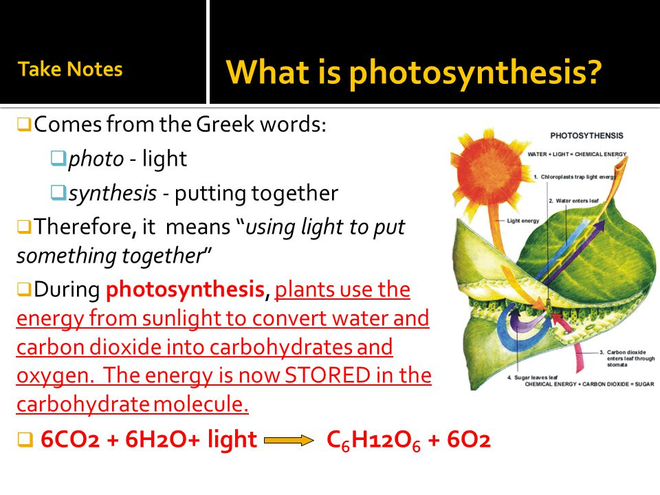 "Take Notes  Comes from the Greek words:  photo - light  synthesis - putting together  Therefore, it means ""using light to put something together"""