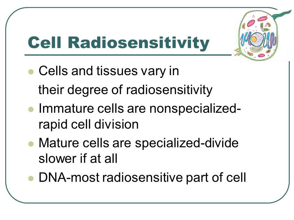 Embryonic and Fetal Risks Fetus is very sensitive Fetal radiosensitivity decreases as gestation progresses