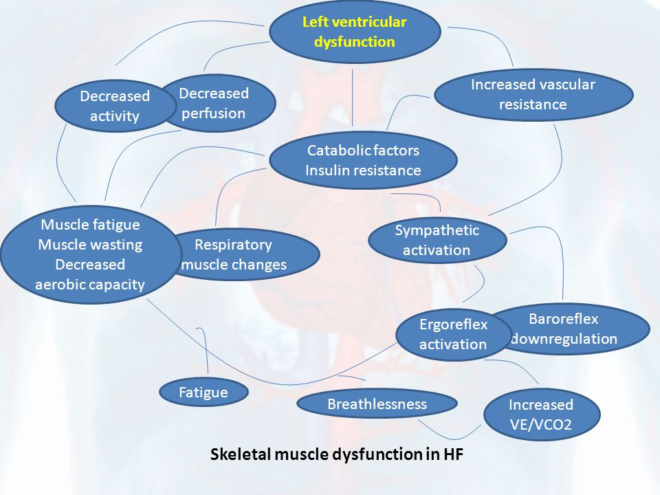Skeletal muscle dysfunction in HF Left ventricular dysfunction Decreased perfusion Decreased activity Catabolic factors Insulin resistance Increased v