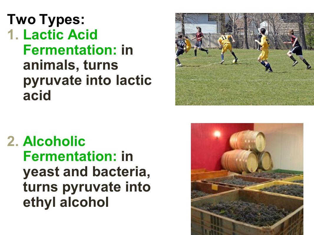 Lactic Acid Fermentation Alcoholic Fermentation