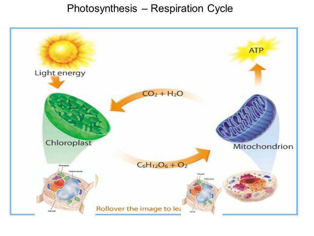 Photophosphorylation vs Oxidative Phosphorylation:
