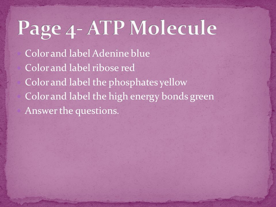 Color and label Adenine blue Color and label ribose red Color and label the phosphates yellow Color and label the high energy bonds green Answer the questions.
