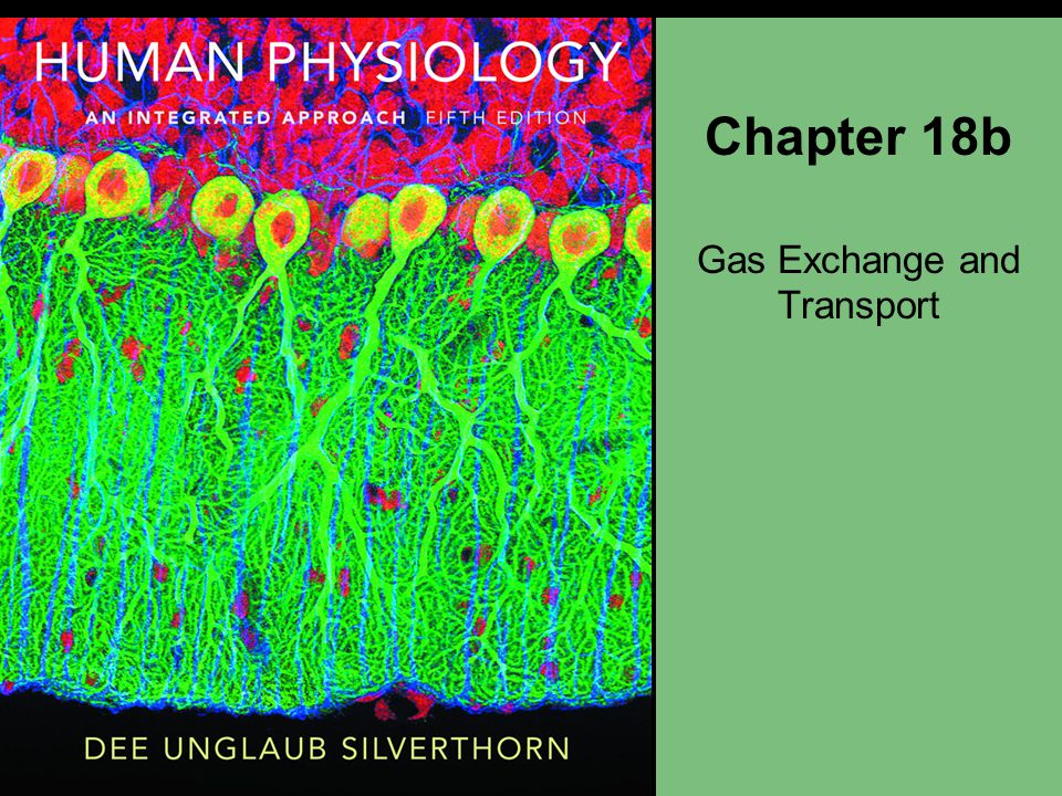 Chapter 18b Gas Exchange and Transport