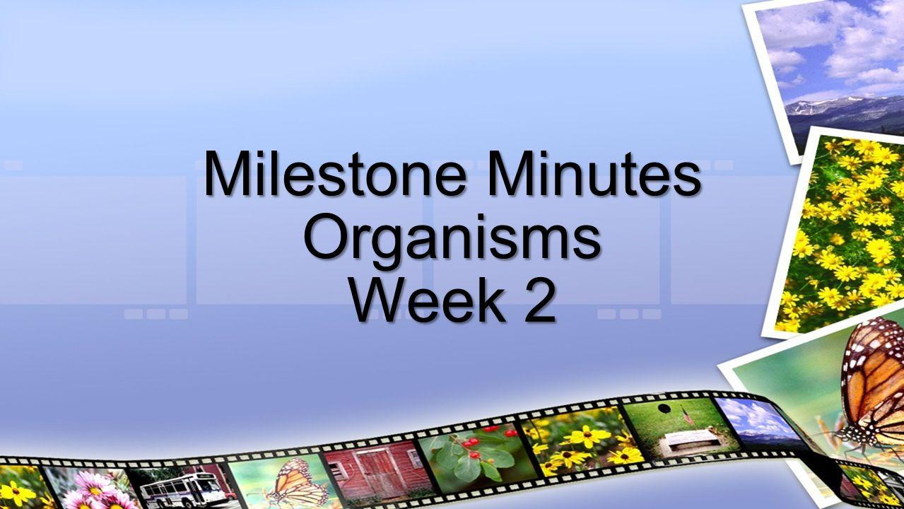 Milestone Minutes Organisms Week 2