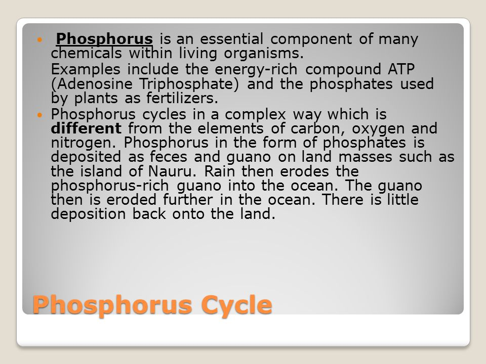 Phosphorus Cycle Phosphorus is an essential component of many chemicals within living organisms.