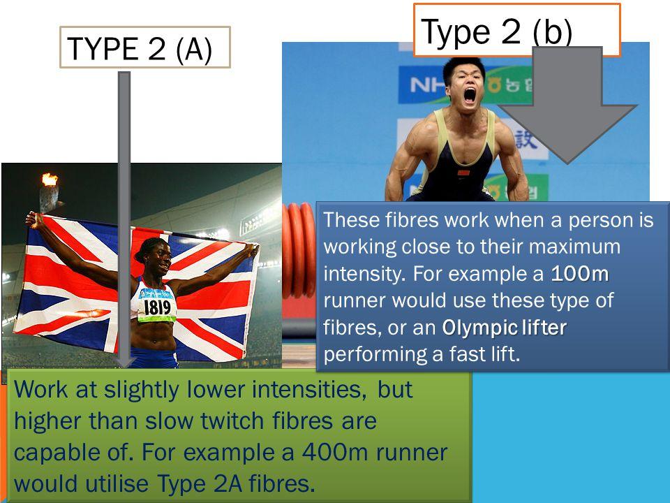 Fiziologija sporta, dva tipa brzih mišićnih vlakana, sportaši