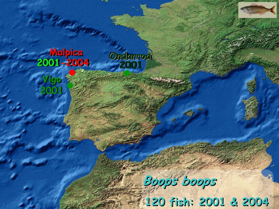 Malpica Vigo OndarroaOndarroa 120 fish: 2001 & 2004 Boops boops 2001-2004 2001