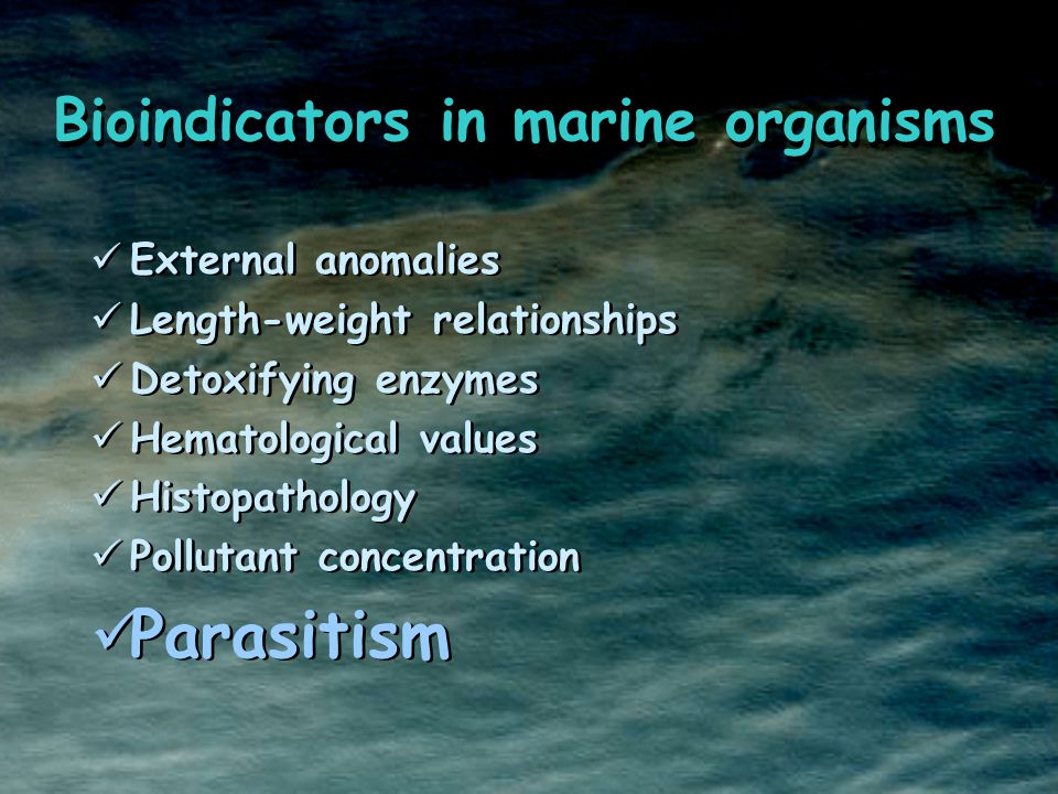External anomalies Length-weight relationships Detoxifying enzymes Hematological values Histopathology Pollutant concentration Parasitism External anomalies Length-weight relationships Detoxifying enzymes Hematological values Histopathology Pollutant concentration Parasitism