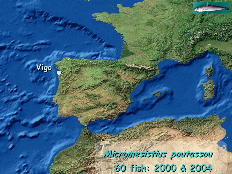 Vigo 60 fish: 2000 & 2004 Micromesistius poutassou Vigo
