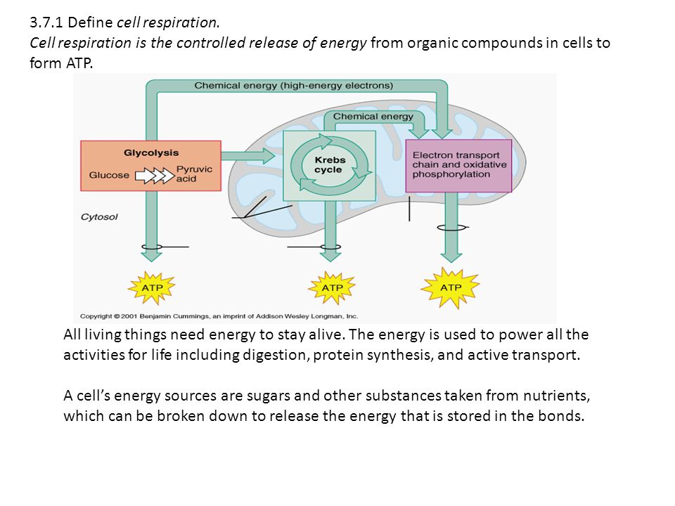 3.7.1 Define cell respiration. Cell respiration is the controlled release of energy from organic compounds in cells to form ATP. All living things nee