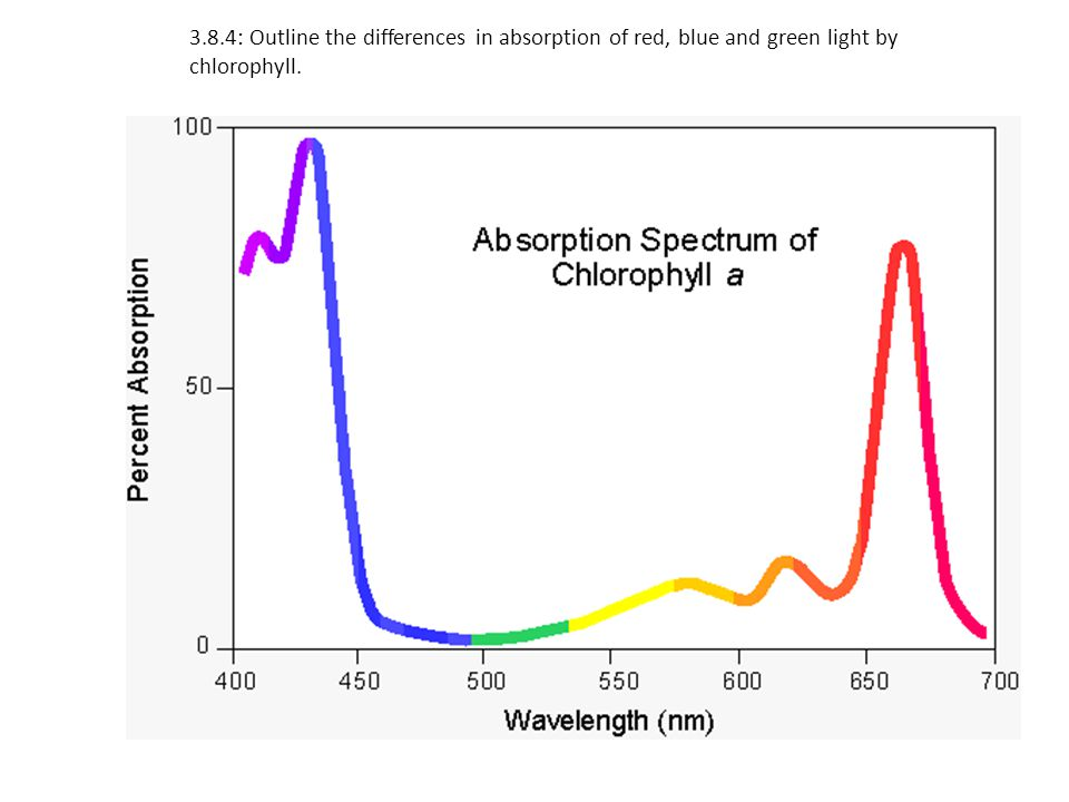 3.8.4: Outline the differences in absorption of red, blue and green light by chlorophyll.
