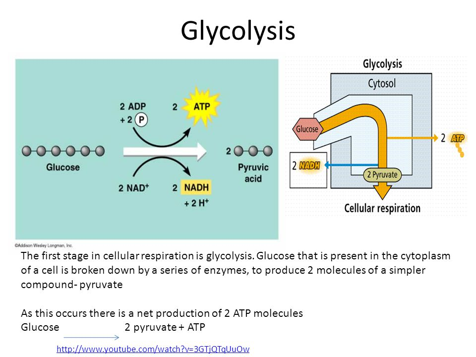 Glycolysis The first stage in cellular respiration is glycolysis. Glucose that is present in the cytoplasm of a cell is broken down by a series of enz