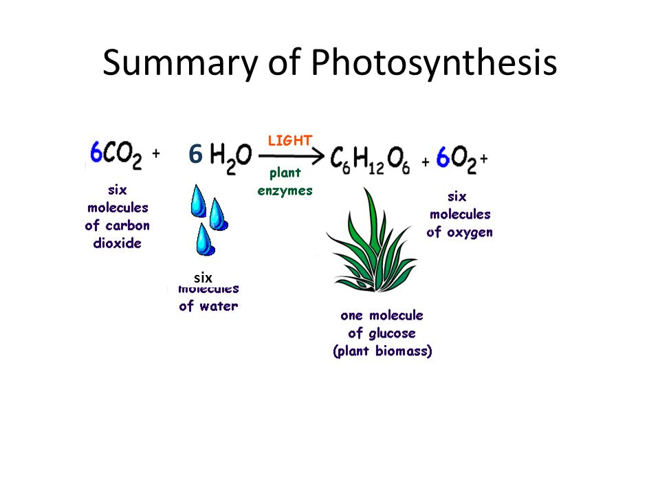 Summary of Photosynthesis 6 six