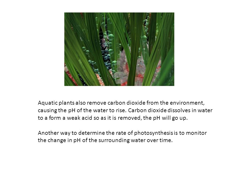 Aquatic plants also remove carbon dioxide from the environment, causing the pH of the water to rise. Carbon dioxide dissolves in water to a form a wea