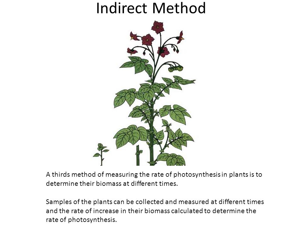 Indirect Method A thirds method of measuring the rate of photosynthesis in plants is to determine their biomass at different times. Samples of the pla