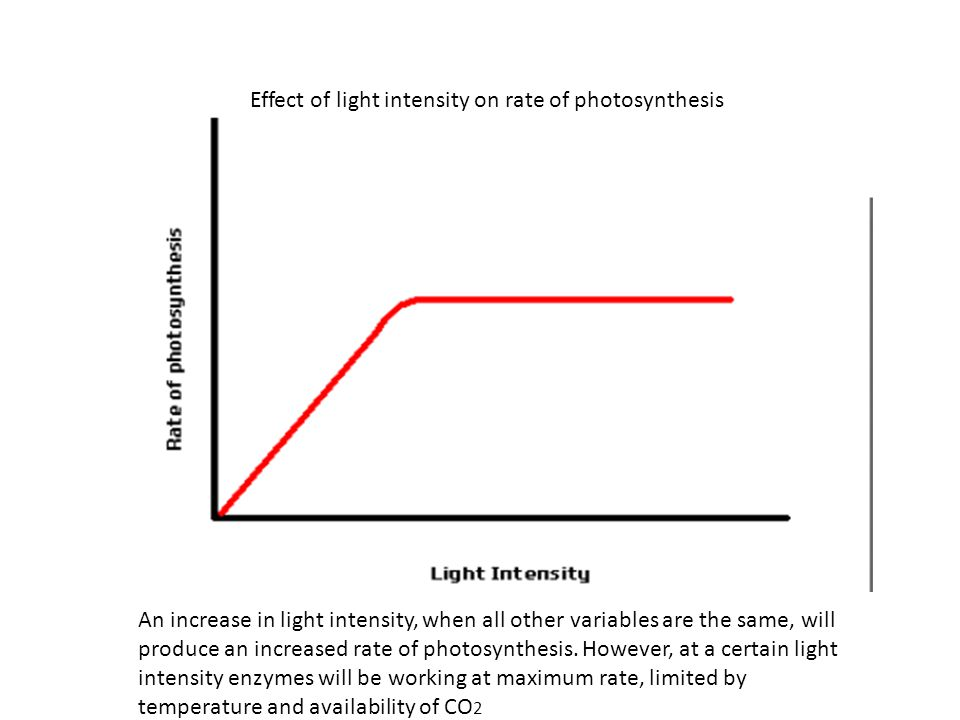Effect of light intensity on rate of photosynthesis An increase in light intensity, when all other variables are the same, will produce an increased rate of photosynthesis.