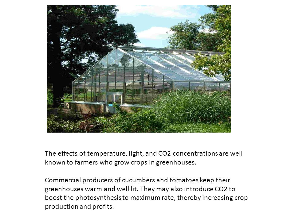 The effects of temperature, light, and CO2 concentrations are well known to farmers who grow crops in greenhouses. Commercial producers of cucumbers a
