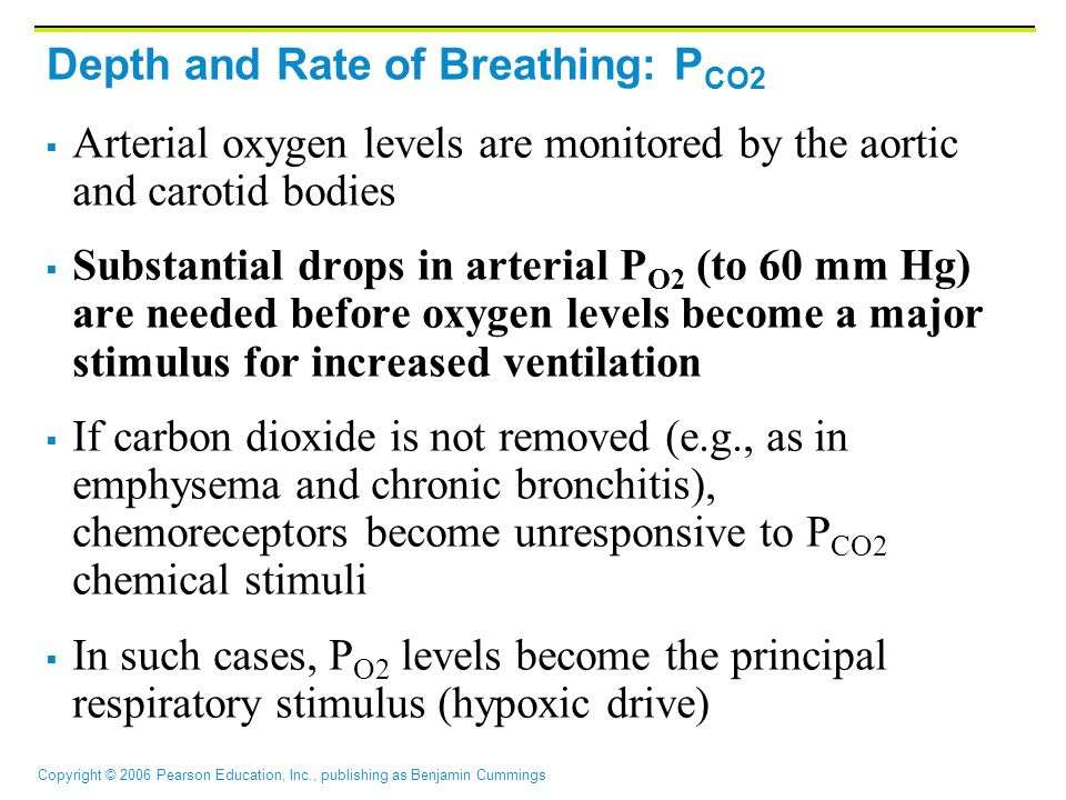 Copyright © 2006 Pearson Education, Inc., publishing as Benjamin Cummings  Arterial oxygen levels are monitored by the aortic and carotid bodies  Substantial drops in arterial P O2 (to 60 mm Hg) are needed before oxygen levels become a major stimulus for increased ventilation  If carbon dioxide is not removed (e.g., as in emphysema and chronic bronchitis), chemoreceptors become unresponsive to P CO2 chemical stimuli  In such cases, P O2 levels become the principal respiratory stimulus (hypoxic drive) Depth and Rate of Breathing: P CO2