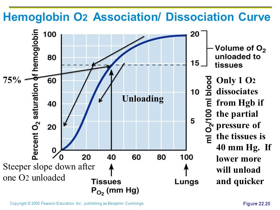 Copyright © 2006 Pearson Education, Inc., publishing as Benjamin Cummings Hemoglobin O 2 Association/ Dissociation Curve Figure 22.20 Unloading Only 1 O 2 dissociates from Hgb if the partial pressure of the tissues is 40 mm Hg.