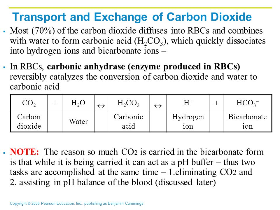 Copyright © 2006 Pearson Education, Inc., publishing as Benjamin Cummings CO 2 +H2OH2O  H 2 CO 3  H+H+ +HCO 3 – Carbon dioxide Water Carbonic acid Hydrogen ion Bicarbonate ion Transport and Exchange of Carbon Dioxide  Most (70%) of the carbon dioxide diffuses into RBCs and combines with water to form carbonic acid (H 2 CO 3 ), which quickly dissociates into hydrogen ions and bicarbonate ions –  In RBCs, carbonic anhydrase (enzyme produced in RBCs) reversibly catalyzes the conversion of carbon dioxide and water to carbonic acid  NOTE: The reason so much CO 2 is carried in the bicarbonate form is that while it is being carried it can act as a pH buffer – thus two tasks are accomplished at the same time – 1.eliminating CO 2 and 2.