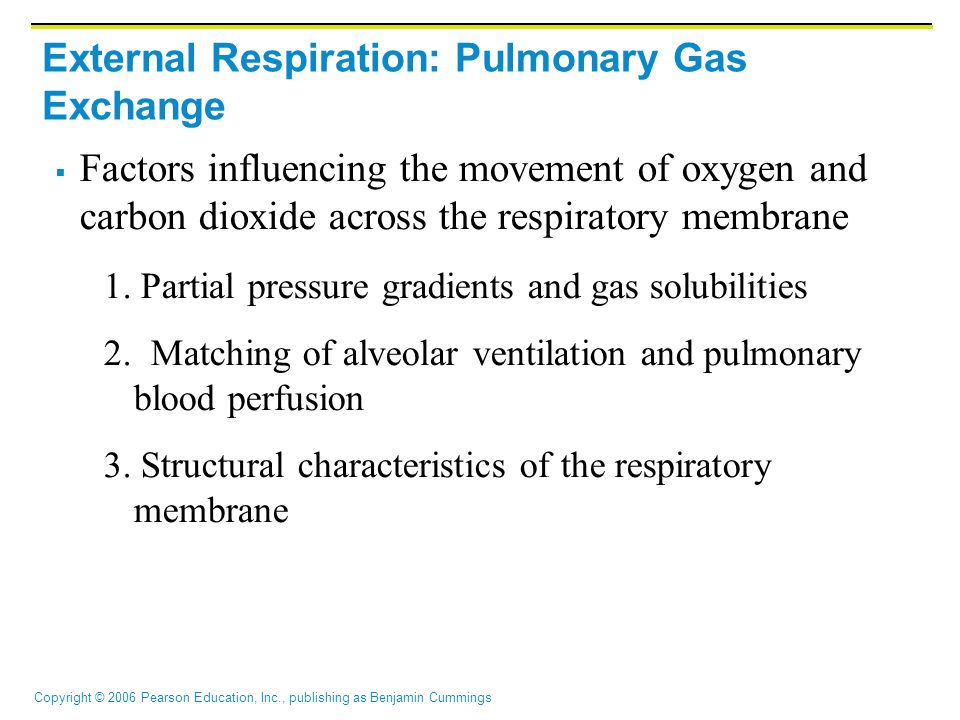 Copyright © 2006 Pearson Education, Inc., publishing as Benjamin Cummings External Respiration: Pulmonary Gas Exchange  Factors influencing the movement of oxygen and carbon dioxide across the respiratory membrane 1.