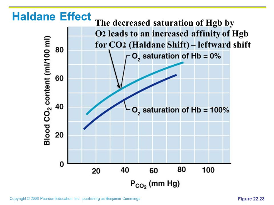 Copyright © 2006 Pearson Education, Inc., publishing as Benjamin Cummings Haldane Effect Figure 22.23 The decreased saturation of Hgb by O 2 leads to an increased affinity of Hgb for CO 2 (Haldane Shift) – leftward shift