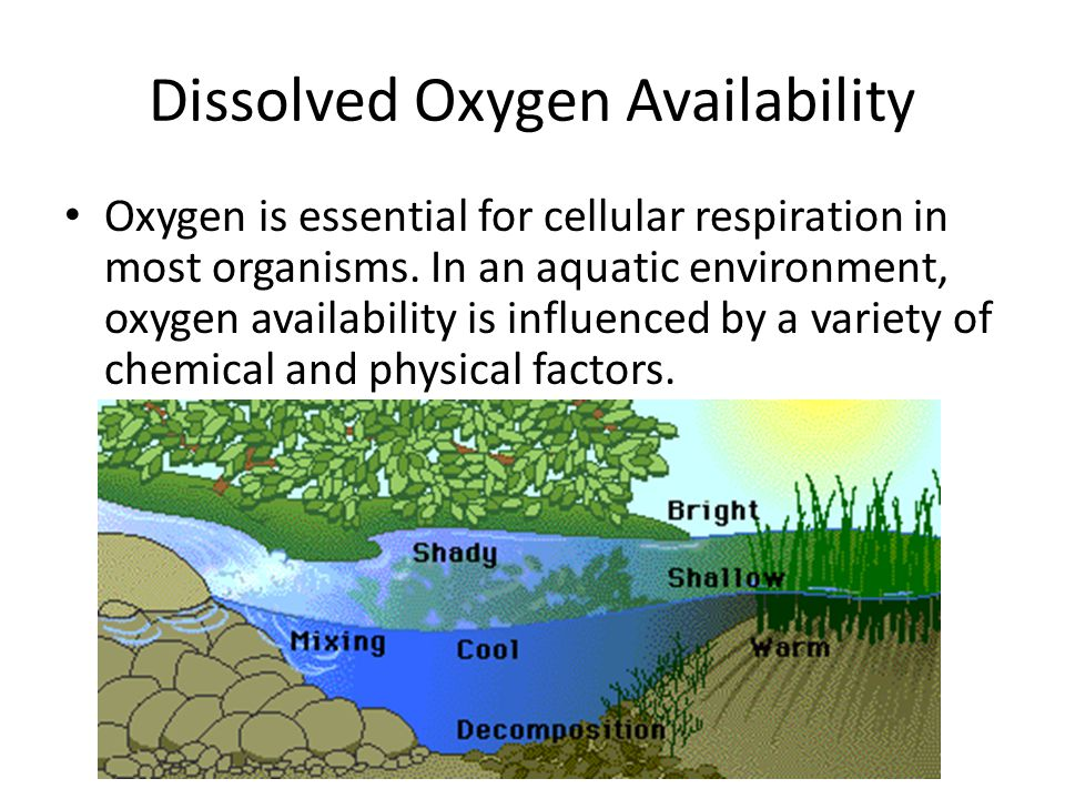 Dissolved Oxygen Availability Oxygen is essential for cellular respiration in most organisms.