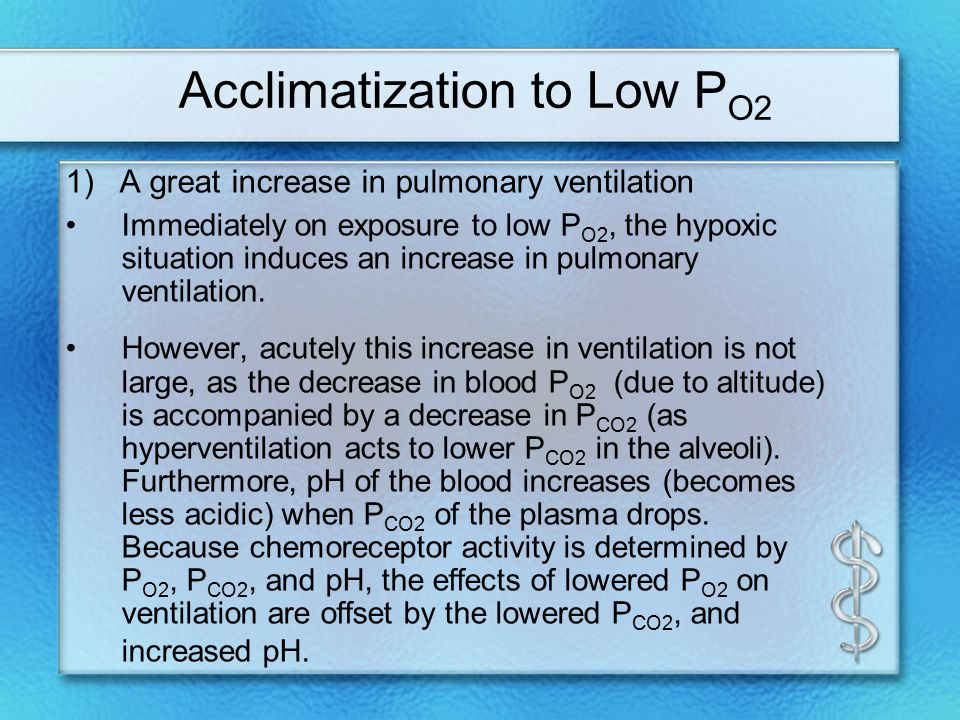 Acclimatization to Low P O2 1) A great increase in pulmonary ventilation Immediately on exposure to low P O2, the hypoxic situation induces an increase in pulmonary ventilation.