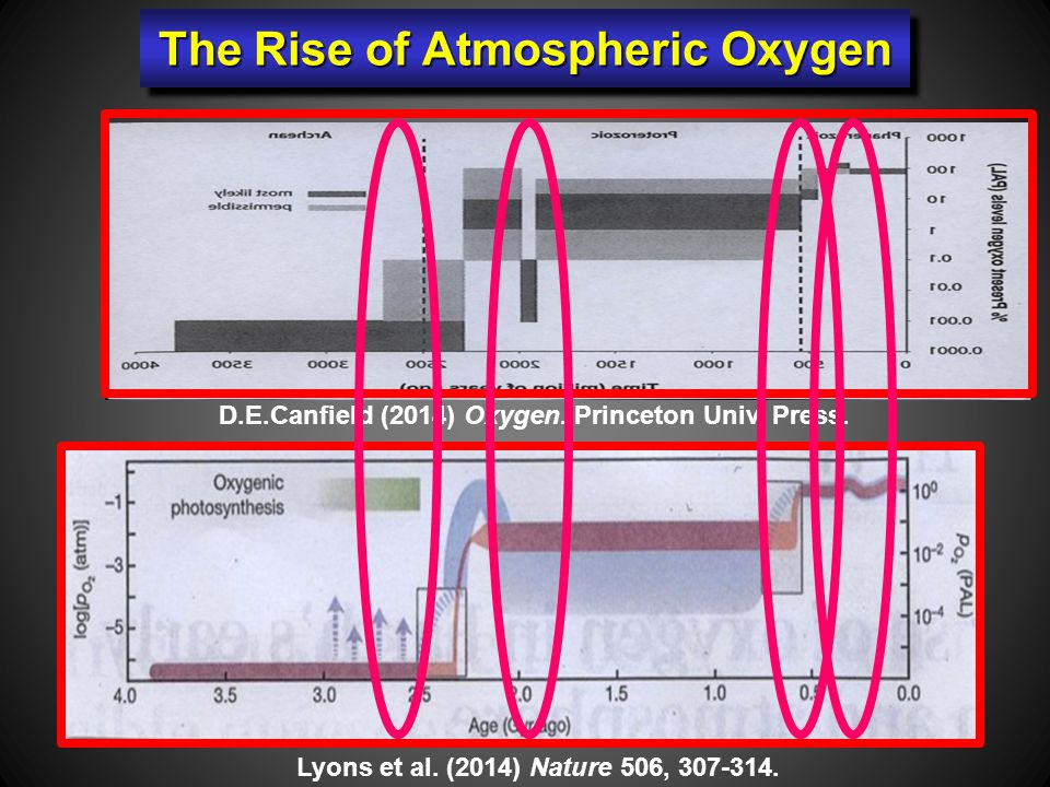The Rise of Atmospheric Oxygen D.E.Canfield (2014) Oxygen.