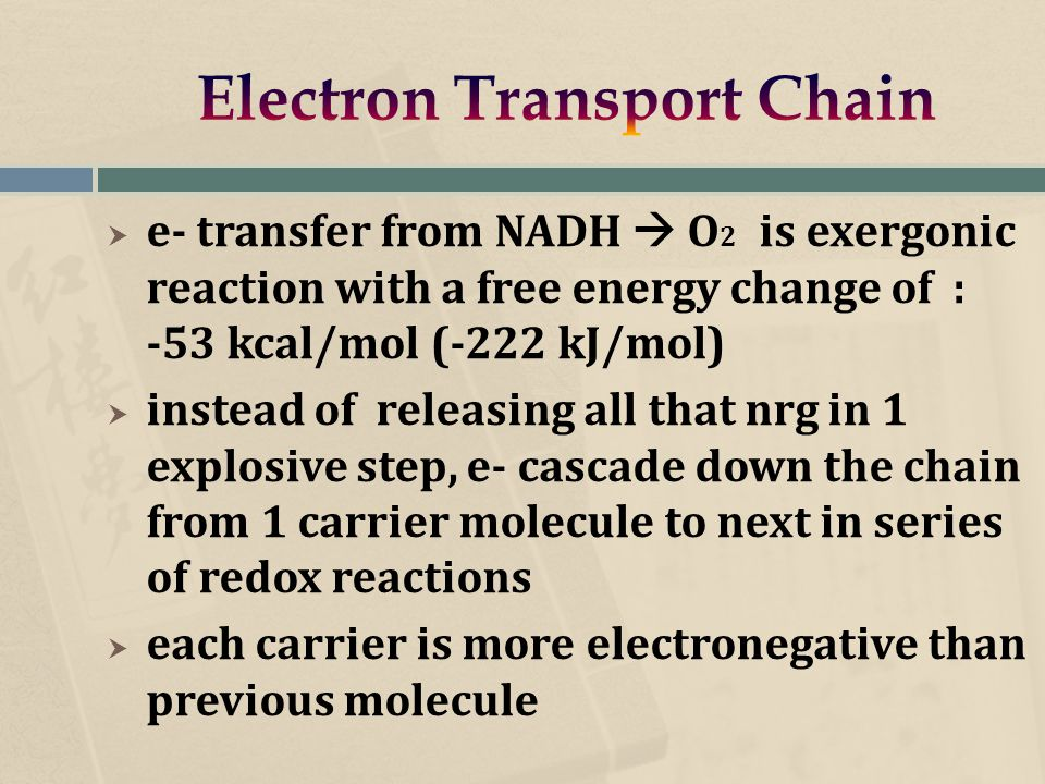  e- transfer from NADH  O 2 is exergonic reaction with a free energy change of : -53 kcal/mol (-222 kJ/mol)  instead of releasing all that nrg in 1 explosive step, e- cascade down the chain from 1 carrier molecule to next in series of redox reactions  each carrier is more electronegative than previous molecule